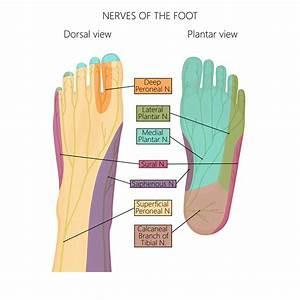 What Are Neuropathy And The Peripheral Nerves