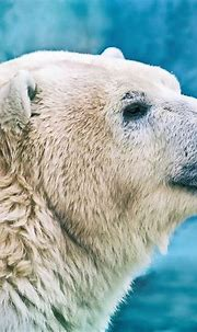 These Photos of Polar Bears Will Take Your Breath Away ...