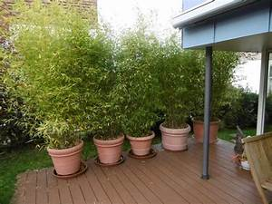 Immergrüne Pflanzen Winterhart Kübel : immergr ne magnolie wei e bl te ~ Lizthompson.info Haus und Dekorationen