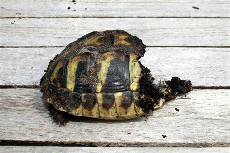 bureau de poste suresnes le pour tortue hermann 28 images la tortue d hermann