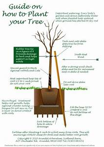 Tree Planting Guide For Large And Small Trees From Arundel