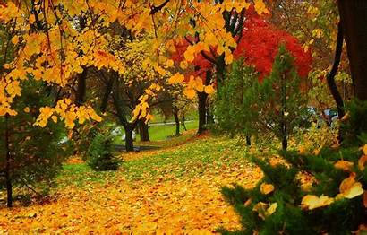 Autumn Fall Trees Leaves Wallpapers Falling Park