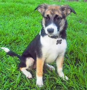 86 best Jack Russell Dogs/Mixes images on Pinterest | Jack ...