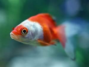 Bilder Mit Fischen : ergebnis f r heute gibts mal wieder ein paar bilder mit fischen und anderem wassergetier auf ~ Frokenaadalensverden.com Haus und Dekorationen
