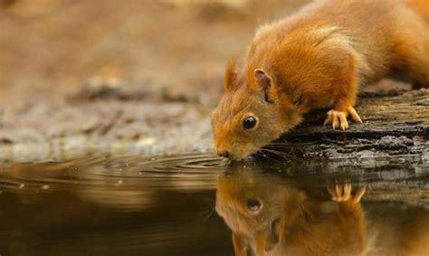 wild animal wallpapers cool pets desktop images cute