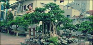 Comment Tailler Un Ficus : bonsa ficus ginseng entretien ~ Melissatoandfro.com Idées de Décoration