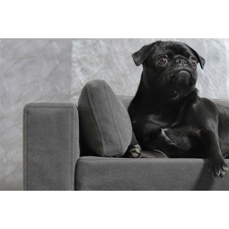 répulsif canapé produit repulsif canape 28 images fauteuil chiens