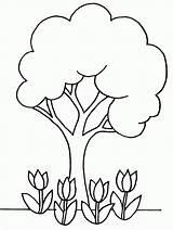 Tree Coloring Oak Popular sketch template