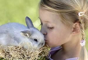 Haustiere Für Kinder : hase hamster hund haustiere und kleine kinder alle infos bei rund ums baby ~ Orissabook.com Haus und Dekorationen