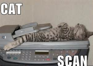 cat scan cat scan pictures quotes pics photos images