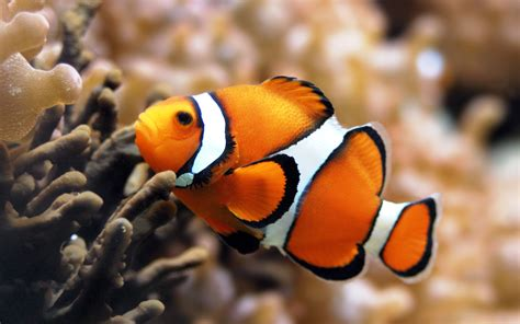 fine animals desktop backgrounds fish hq definition