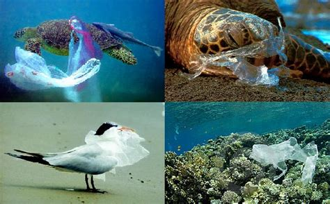 lesley mero  effect plastic bags    death  wildlife