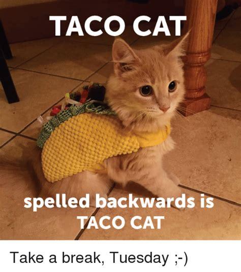 Taco Tuesday Meme - taco cat spelled backwards is taco cat take a break tuesday meme on sizzle