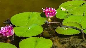 Tiere Im Gartenteich : ringelnatter im gartenteich foto bild tiere wildlife amphibien reptilien bilder auf ~ Eleganceandgraceweddings.com Haus und Dekorationen