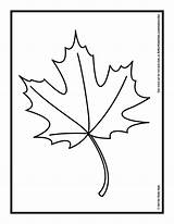 Leaf Coloring Autumn Drawing Fall Maple Leaves Printable Oil Pastels Oak Hub Pages Palm Drawings Template Outline Clipartmag Getcolorings Pumpkin sketch template