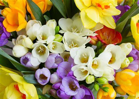 regalare fiori significato fiori significato dei fiori simbologia e linguaggio dei