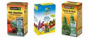 Pyrale Du Buis Traitement Bayer : traitement pyrale du buis conseils coaching jardinage ~ Dailycaller-alerts.com Idées de Décoration