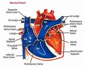 That Oxygenated From Lungs Passes Major Arteries And Gets