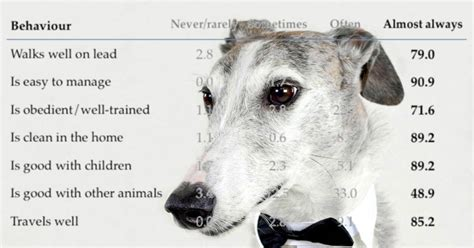 pros cons  greyhound adoption walkerville vet
