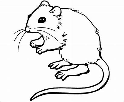 Template Printable Rat Mouse Templates Colouring Nowok