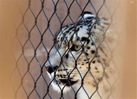 zoos cruel animals virily