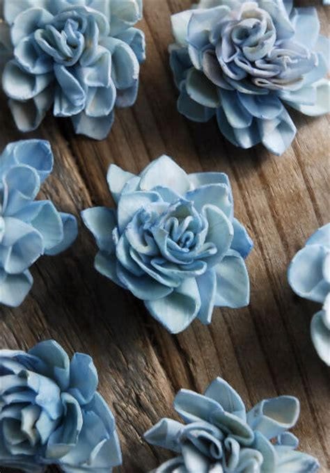 sola flowers dahlia blue  flowers