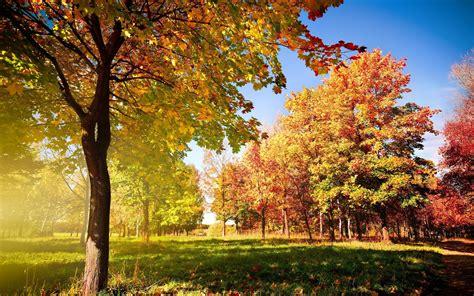 Autumn Trees Hd Wallpaper  Hd Desktop Wallpapers  4k Hd