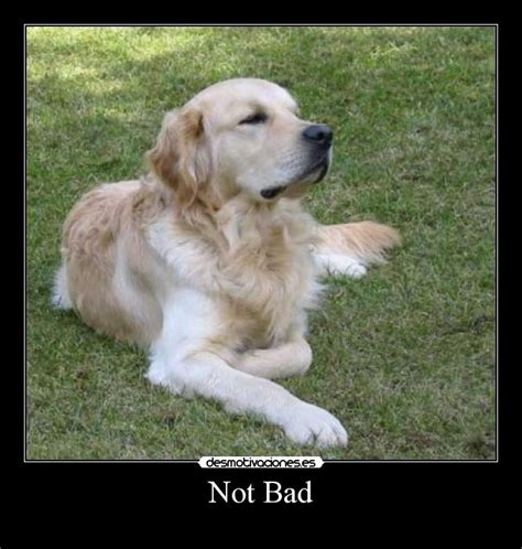 Golden Retriever Meme - golden retriever meme 28 images golden memes image memes at relatably com golden retriever