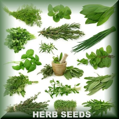 Window Spice Garden by Fresh Herb Seeds Varieties Best Quality Aromatic Medicinal