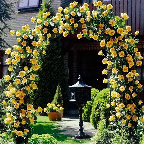 Here Are Top 5 Beautiful Patio Cover Plants Blog