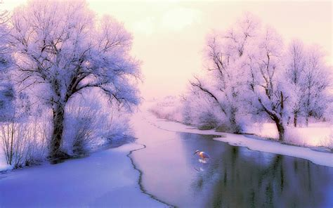 Scenic Winter Free Download Hd Wallpapers 5859 Amazing