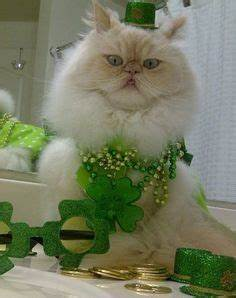 1000+ images about St Patrick's Day cats on Pinterest | St ...