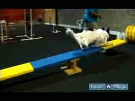 images  dog agility  pinterest  dogs