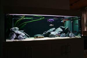 Aquarium Gestaltung Bilder : aquarienbilder barschkeller bielefeld ~ Lizthompson.info Haus und Dekorationen