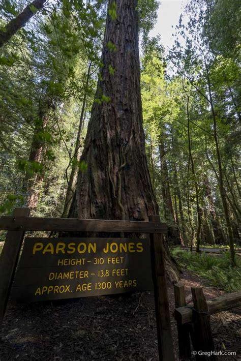 armstrong redwoods state natural reserve blog gregharkcom