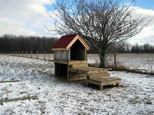 MUST LOVE KIDS! | Sheepy Hollow Farm