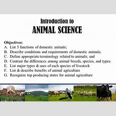 Introduction To Animal Science  Ppt Video Online Download