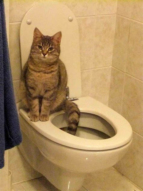 hanford veterinary hospital  toilet training cats  wave   future