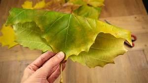 Blätter Basteln Herbst : in herbst basteln mit kindern herbstlicher rosenstrauss ~ Lizthompson.info Haus und Dekorationen