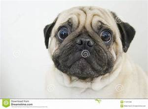 royalty free stock photos worried canine face closeup image