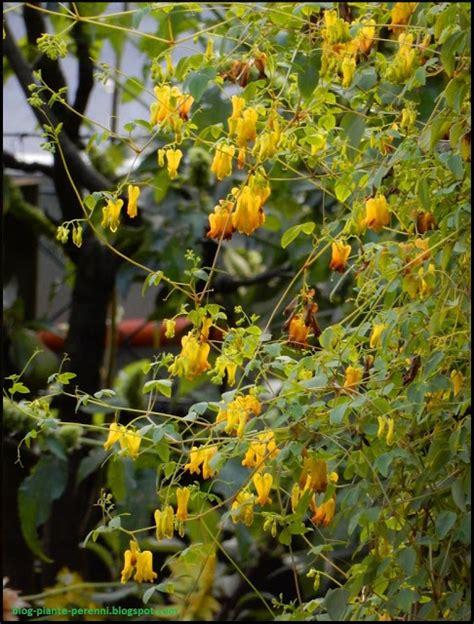 immagini giardini fioriti immagini di giardini fioriti