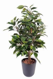Arbuste D Intérieur : plante arbuste exterieur ~ Premium-room.com Idées de Décoration