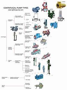 Chartbckgr Pumps Bak Jpg  1100 U00d71494