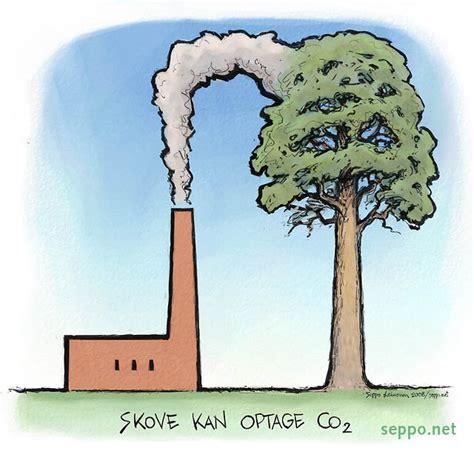 carbon sink definition biology sinks ideas