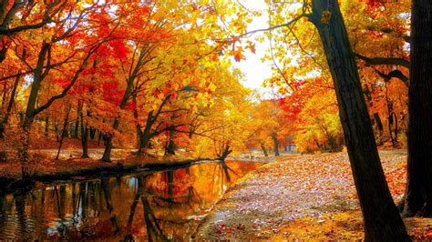 Beautiful Autumn Trees Wallpapers by Autumn Trees Wallpaper 85 Images