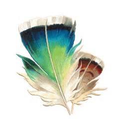 Beautiful Bird Feathers