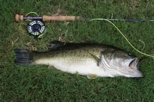 Best Largemouth Bass Flies