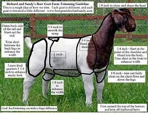 Goat Farming  Getting Back To Basics