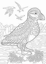 Puffin Bird Coloring Cartoon Zentangle Stylized Depositphotos Pingouin Libres Droits sketch template