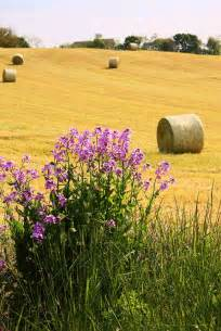 Country Fields Hay Bales